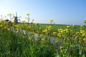De Beemster Polder: idyllisch UNESCO erfgoed in Nederland