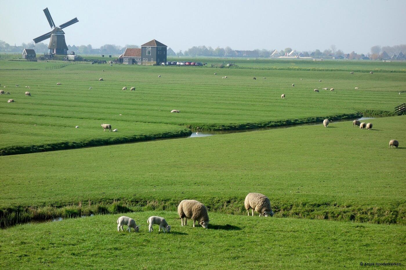 Het mooie landschap rondom De Beemster in Laag Holland