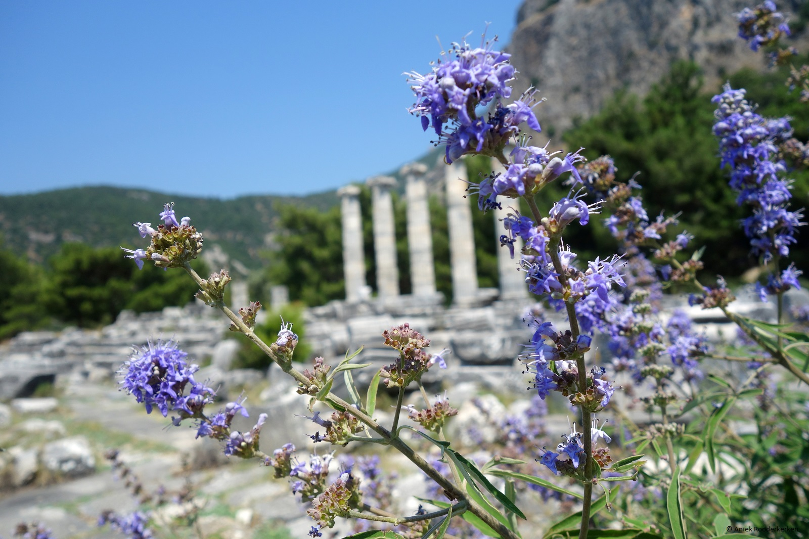 Archaeological gem: Priene, Turkey