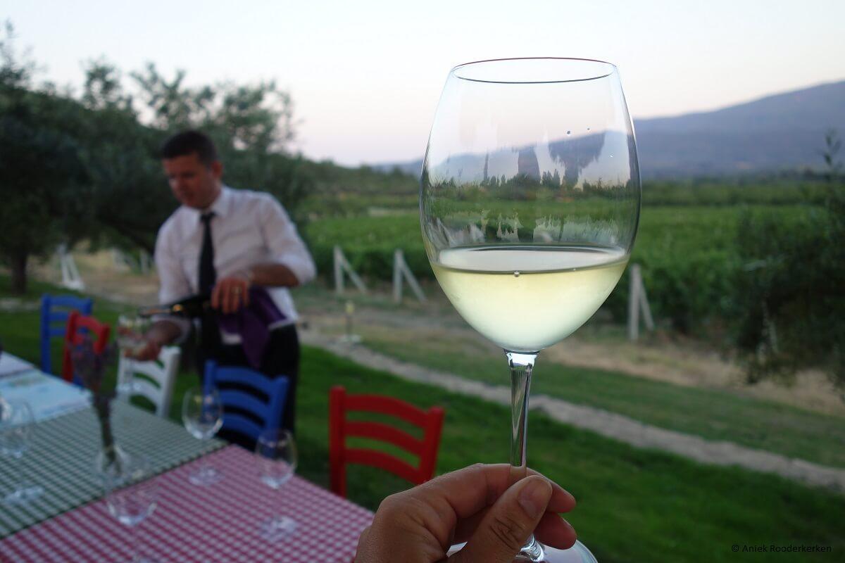 Yedi Bilgeler vineyard near Kusadasi