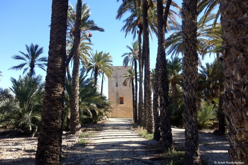 Palmeral of Elche, Spain