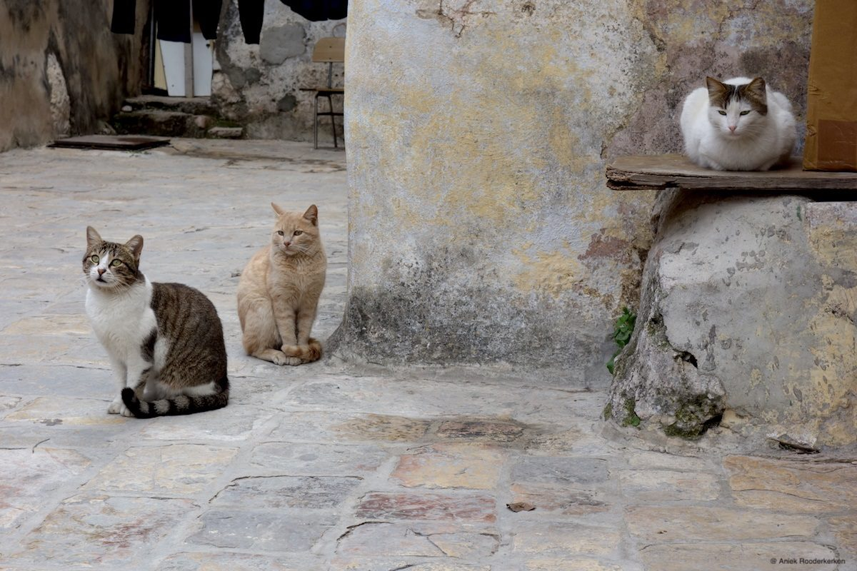 Cats on the roof of the Holy Sepulcher in Jerusalem