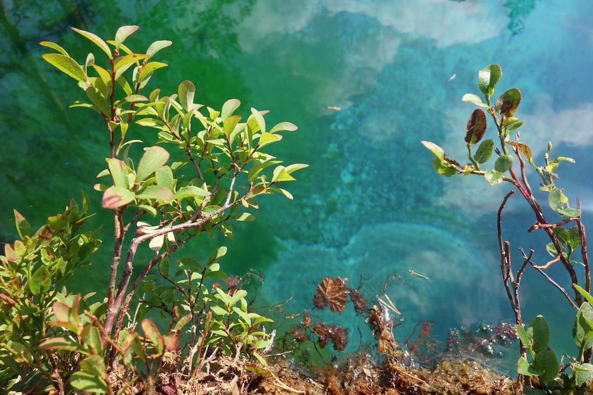 The water of this spring lake is nearly unnatural turquoise and so crystal clear that you can see every detail