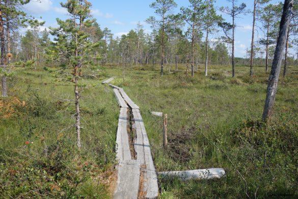Slengmyran: Hiking in Swedish Lapland
