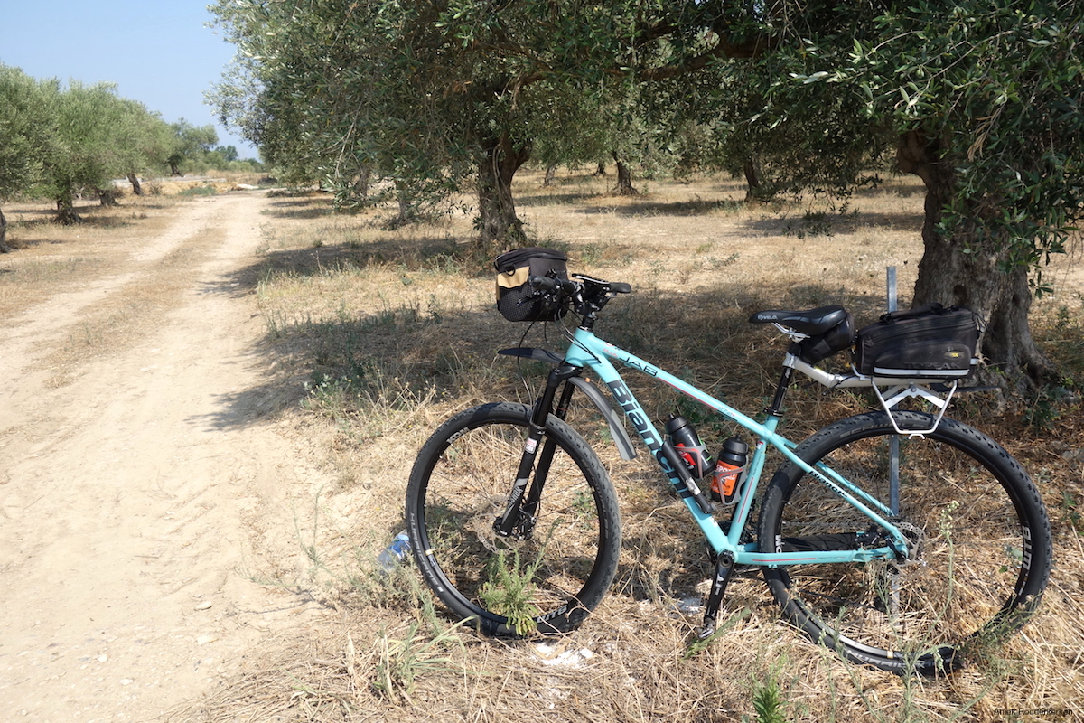 Cycling in Girona: kilometres of olive trees