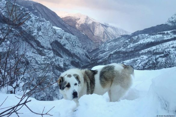 Snowshoeing in Bosnia and Herzegovina