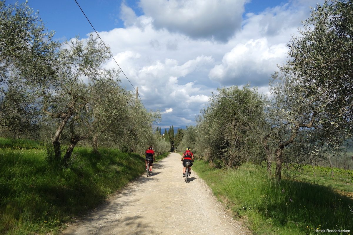 Between the olive trees and in the direction of Florence