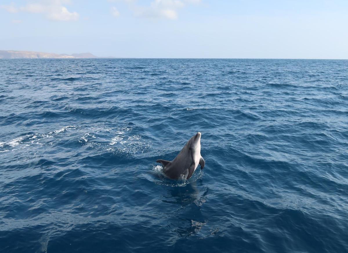Dolfijnen spotten op Tenerife