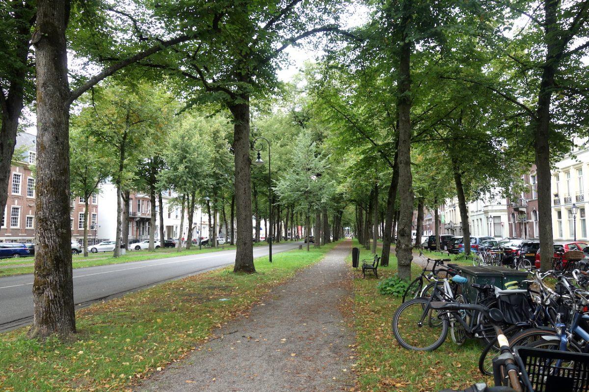 De Utrechtse Maliebaan
