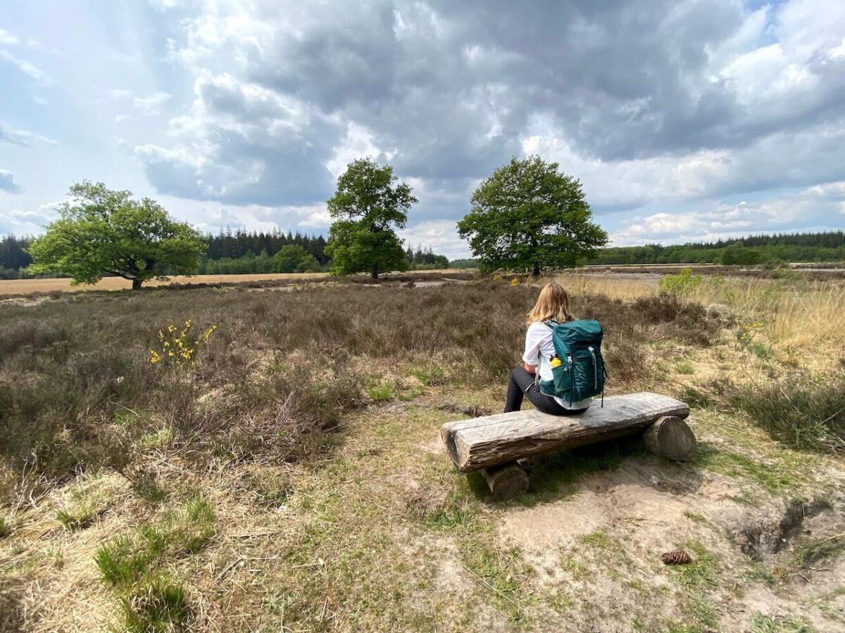 Grolloo forestry in Drenthe