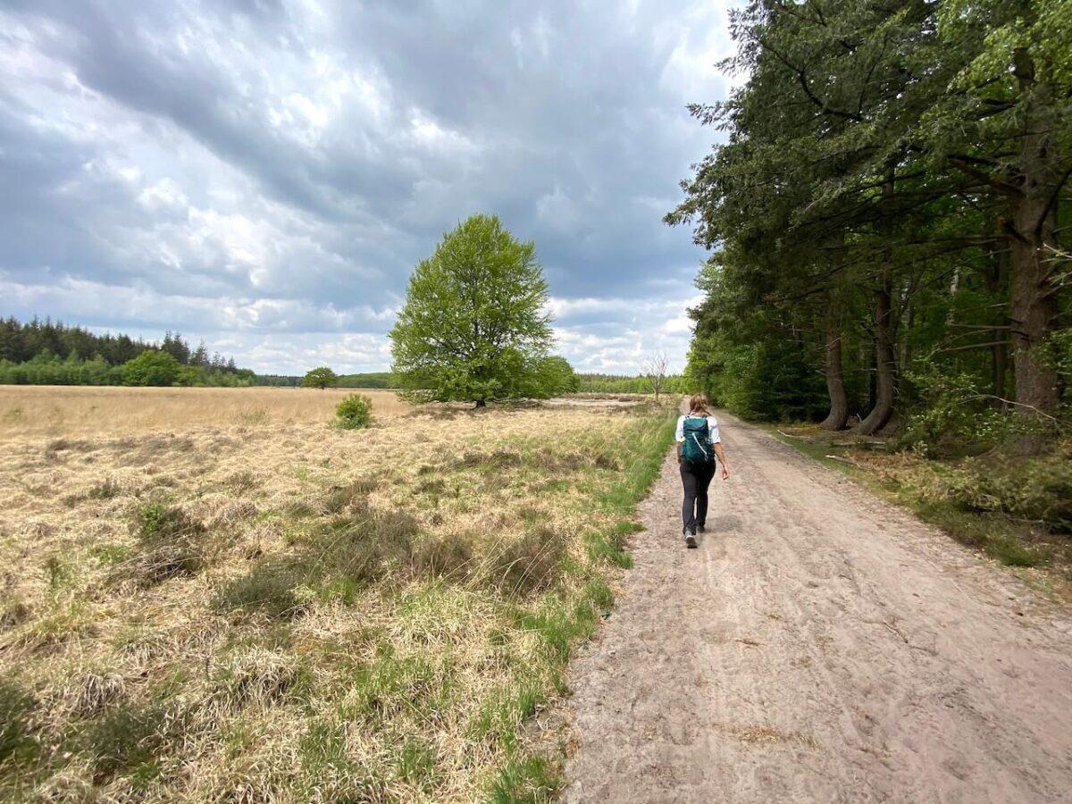Hiking trail Boswachterij Grolloo