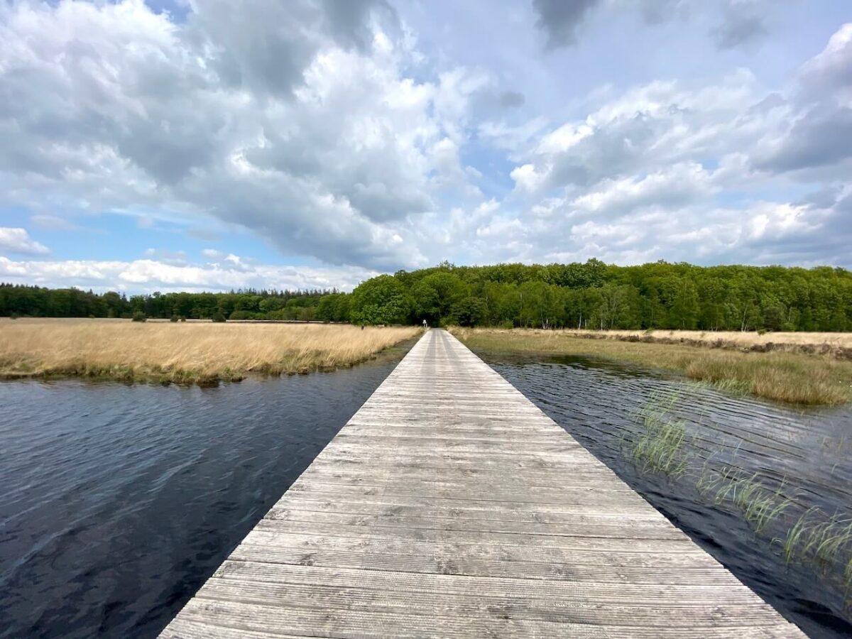 A wooden plank footpath on Grolloërveen