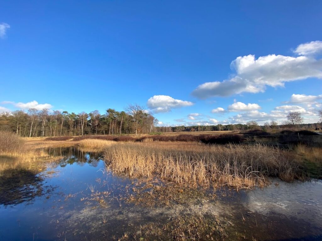 Wandelroute over de Gorsselse Heide