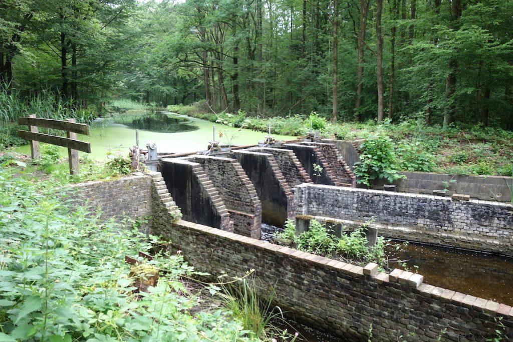 Wandelen in het Waterloopbos in Flevoland